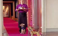 Hôtel de luxe pour chiens -